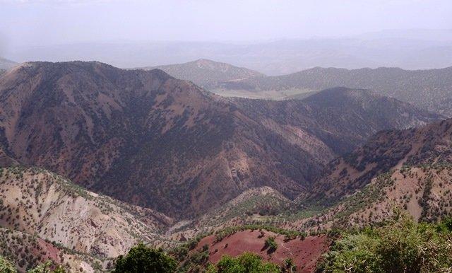 گیاهان کوهی